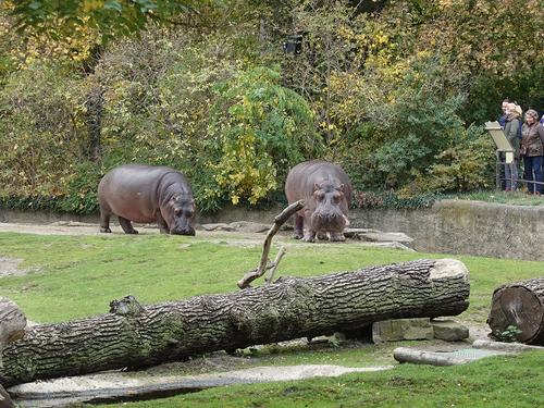 20181020 berlin zoo 1-13.jpg