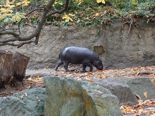 20181020 berlin zoo 1-18.jpg