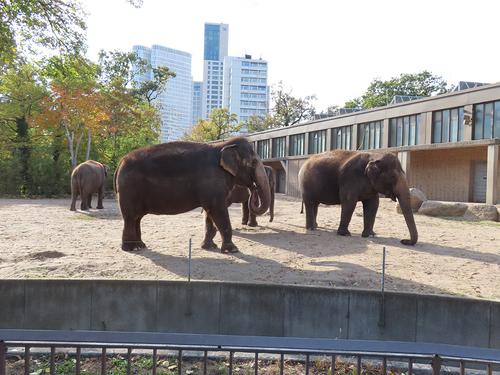20181020 berlin zoo 1-4.jpg
