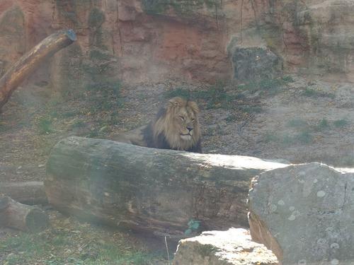 20190114 h i zoo 11.jpg