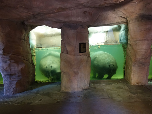 20190114 h i zoo 6.jpg