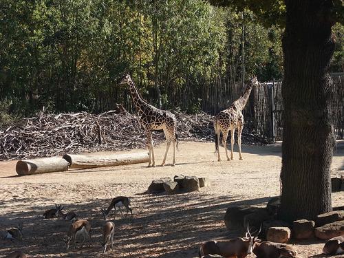 20190114 h i zoo 7.jpg