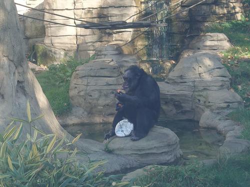 20190114 h i zoo 9.jpg