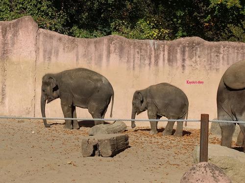20190114 h zoo 10.jpg