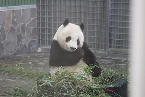 0180619 zoo2.jpg