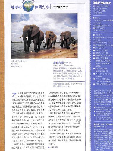 20171231 elefant.jpg