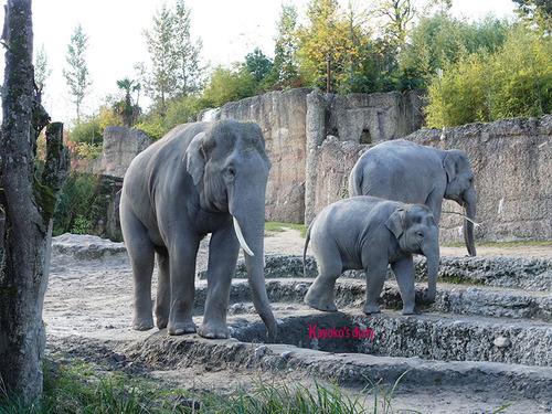 20180122 1 elefant 1.jpg