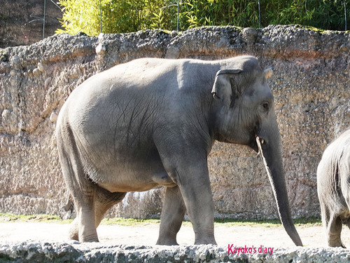 20180122 1 elefant 10.jpg
