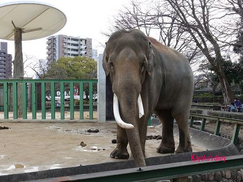 20180122 1 elefant 11.jpg