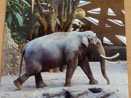 20180122 1 elefant 12.jpg