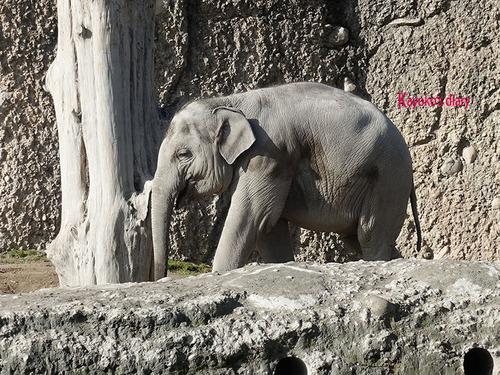 20180122 1 elefant 2.jpg