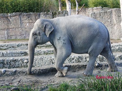 20180122 1 elefant 3.jpg