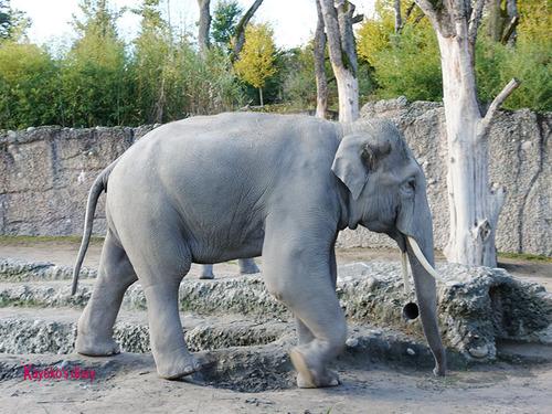 20180122 1 elefant 5.jpg