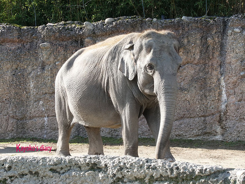 20180122 1 elefant 6.jpg