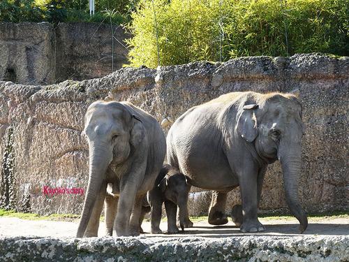 20180122 1 elefant 8.jpg