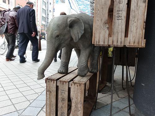 20180225 elefant2.jpg