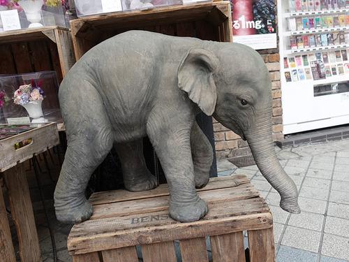20180225 elefant3.jpg