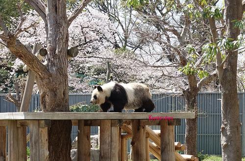 20180330 zoo11.jpg