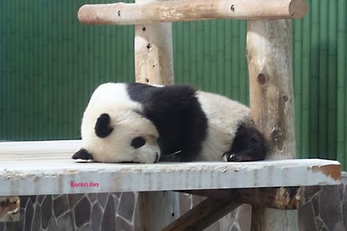20180424 zoo2.jpg