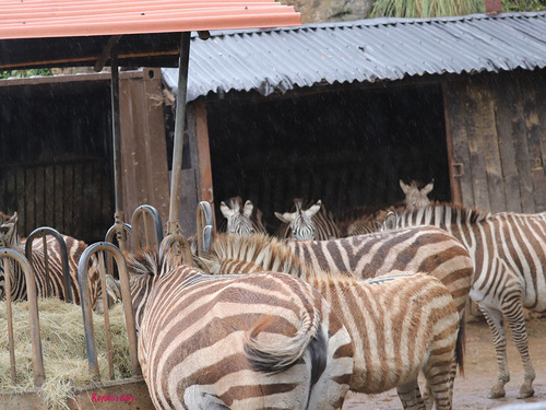 20180502 zoo cabarceno 1-18.jpg