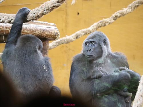 20180502 zoo cabarceno 1-26.jpg