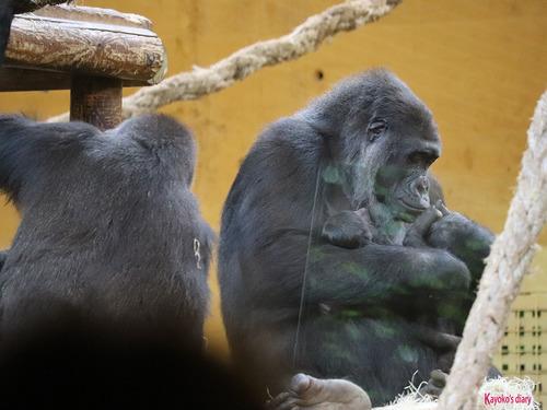 20180502 zoo cabarceno 1-27.jpg