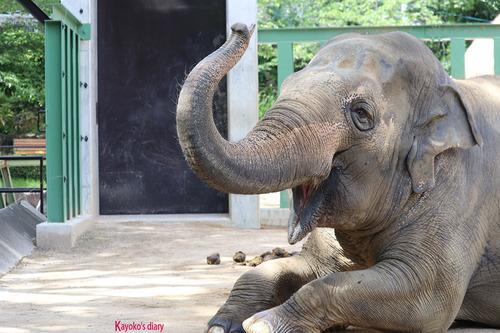 20180525 zoo10.jpg