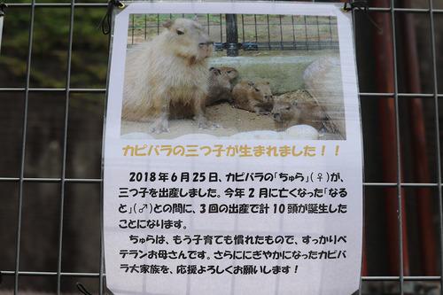 20180626 zoo4.jpg