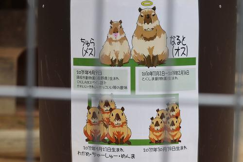 20180626 zoo5.jpg