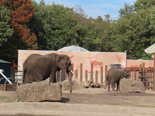 20181016 zoo oli20.jpg