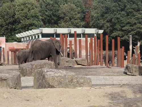 20181016 zoo oli7.jpg