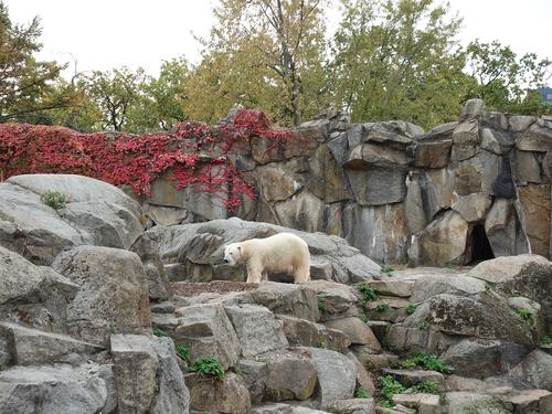 20181020 berlin zoo 1-15.jpg