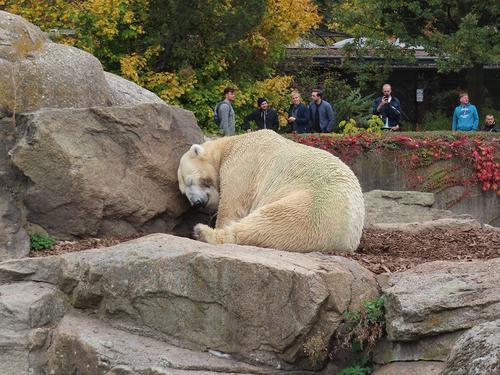 20181020 berlin zoo 1-16.jpg