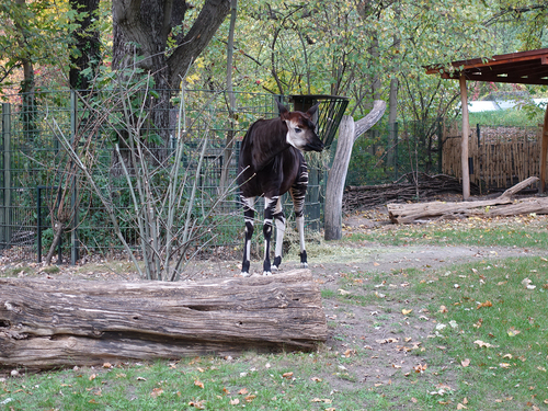 20181020 berlin zoo 1-17.jpg