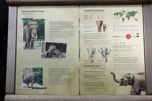 20181020 berlin zoo elphant 1-11.jpg