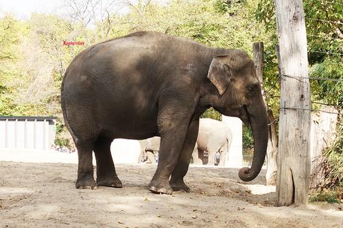 20181020 berlin zoo elphant 1-16.jpg