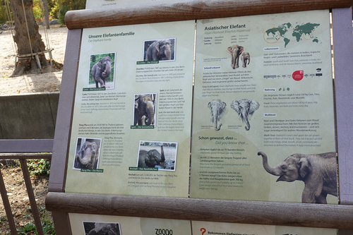 20181020 berlin zoo elphant 1-3.jpg