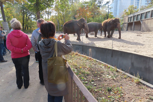 20181020 berlin zoo elphant 1-4.jpg