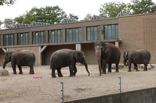 20181020 berlin zoo elphant 1-7.jpg