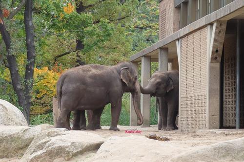 20181020 berlin zoo elphant 1-8.jpg