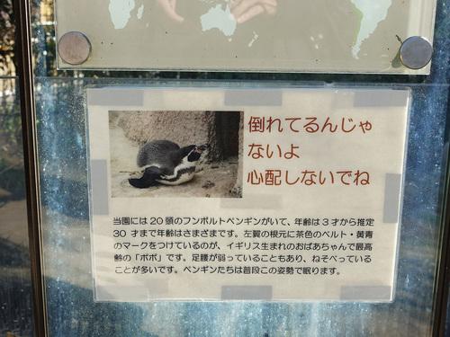 20190425 pingouin1.jpg