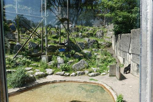 20190626 zoo 1-07.jpg