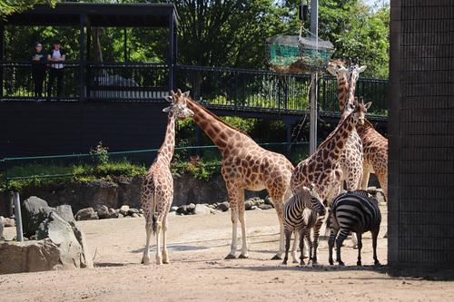 20190626 zoo 1-10.jpg
