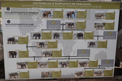 20190701 elephant 01.jpg