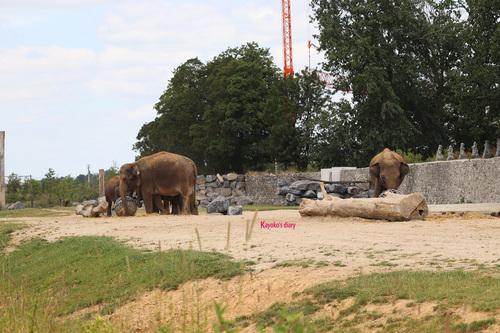 20190701 elephant 08.jpg
