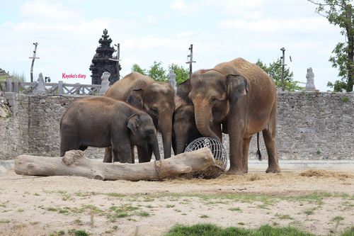 20190701 elephant 09.jpg