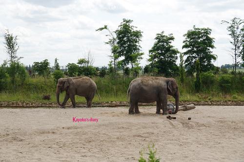 20190701 elephant 10.jpg