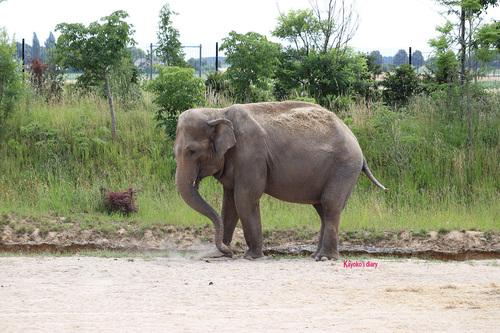 20190701 elephant 11.jpg