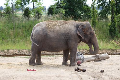 20190701 elephant 12.jpg