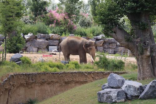 20190701 elephant 13.jpg
